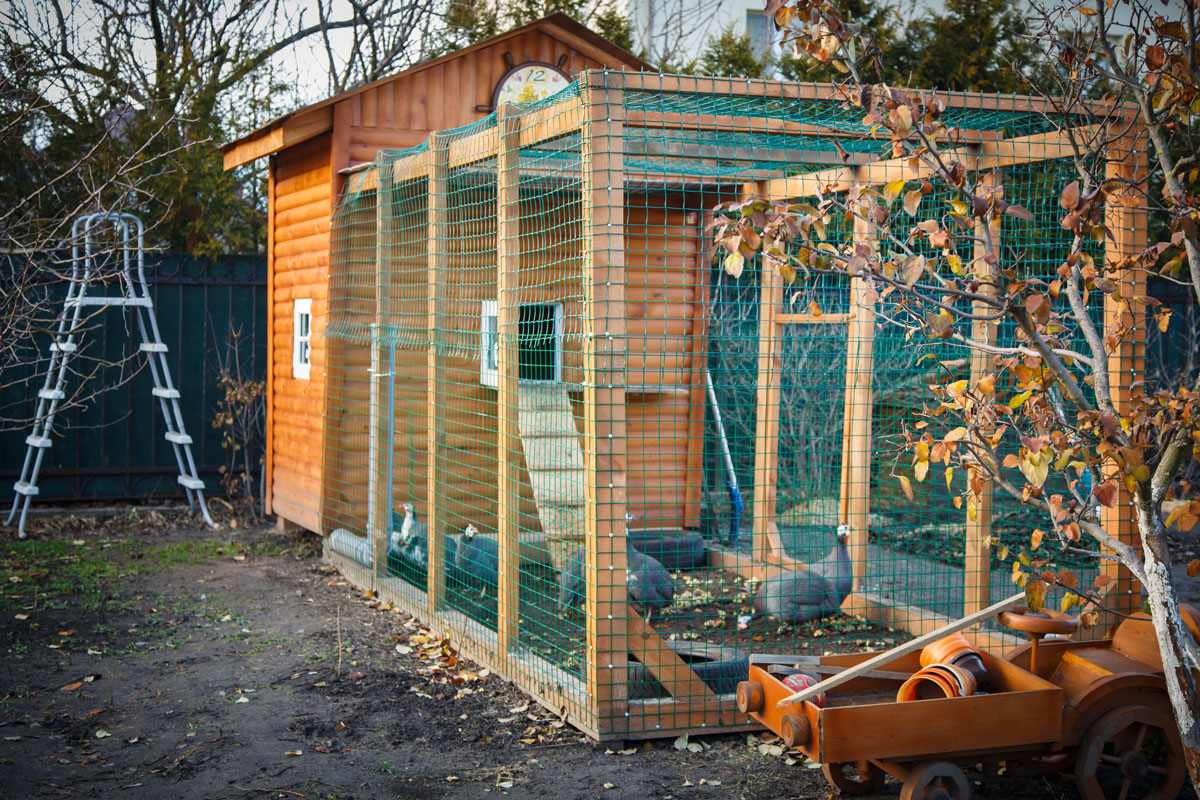 how to get rid of ants in chicken coop